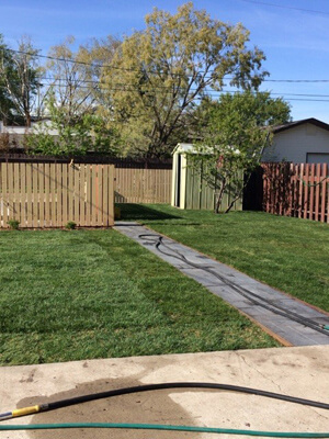 Backyard After Turf was Installed